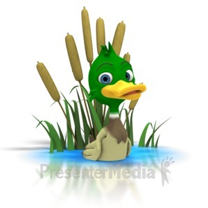 ID# 1286 - Mallard Duck Sitting In Pond - Presentation Clipart