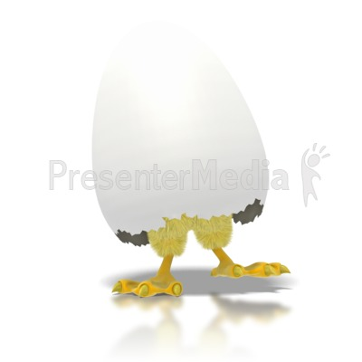 Baby Chicken Or Chick Hatching From Egg Wildlife And