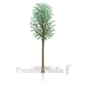 ID# 4082 - Young Oak Tree Sapling - Presentation Clipart