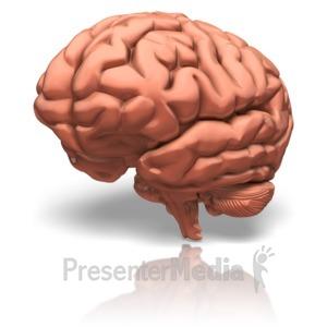 ID# 9189 - Human Brain - Presentation Clipart