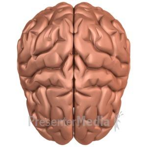 ID# 10338 - Brain Top View - Presentation Clipart