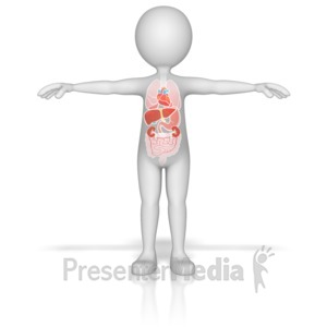 ID# 13140 - Figure with Organs - Presentation Clipart
