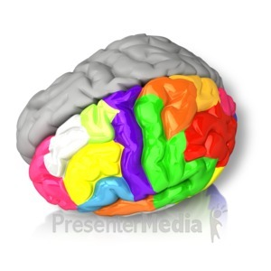 ID# 15067 - Left Brained Color - Presentation Clipart