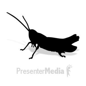 ID# 17007 - Grashopper - Presentation Clipart
