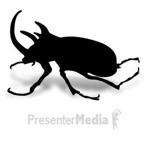 ID# 17013 - Rhino Beetle - Presentation Clipart