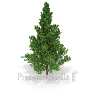 ID# 17374 - Pine Tree - Presentation Clipart