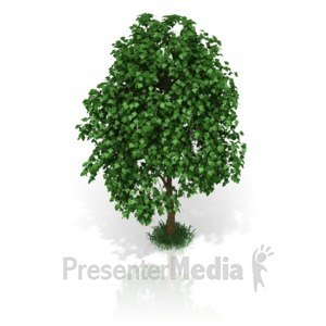 ID# 17415 - Small Tree - Presentation Clipart