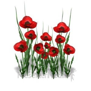 ID# 18642 - Poppy Flower Bunch - Presentation Clipart