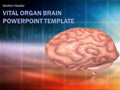 Vital organ brain scan a powerpoint template from presentermedia toneelgroepblik Images