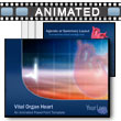 Vital Organ Heart PowerPoint template