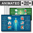 ID# 11697 - Inside Medical - PowerPoint Template