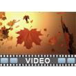 Autumn Wind PowerPoint Video Background