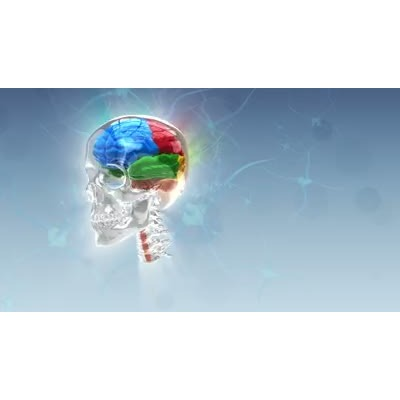 ID# 8495 - Revolving Brain - Video Background