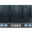 Dead Swamp PowerPoint Video Background