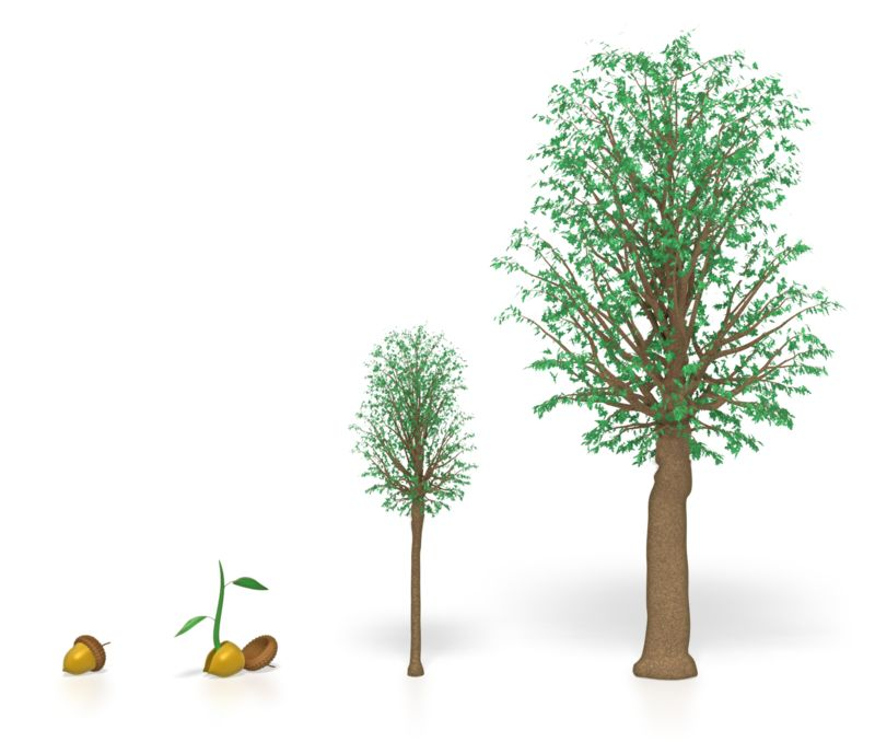 Clipart - Tree Growing
