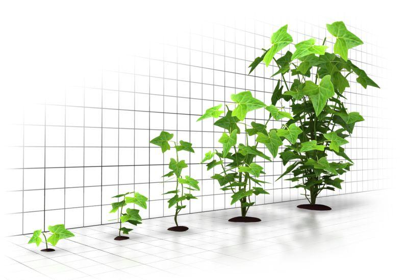 Clipart - Organic Growth Graph