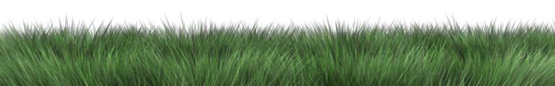 Clipart - Long Grass