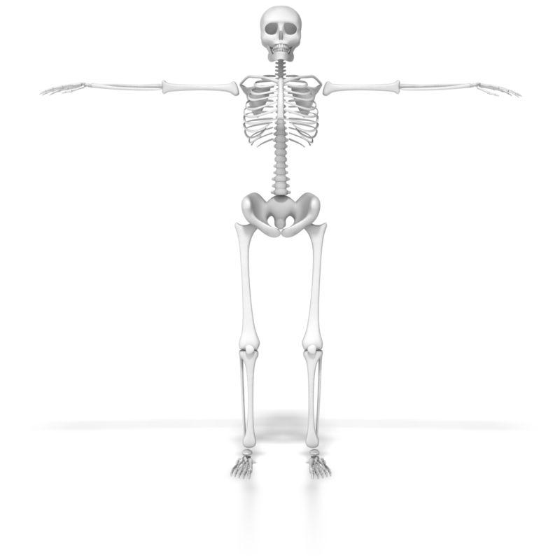 Clipart - Skeleton In Default Pose
