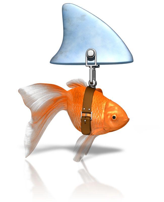Clipart - Clever Goldfish Shark