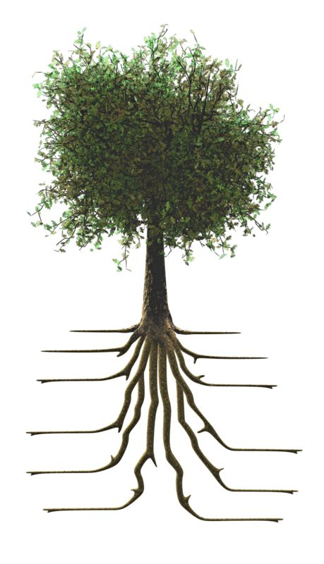 Clipart - Tree With Roots
