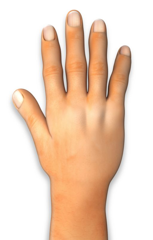 Clipart - Back of Hand