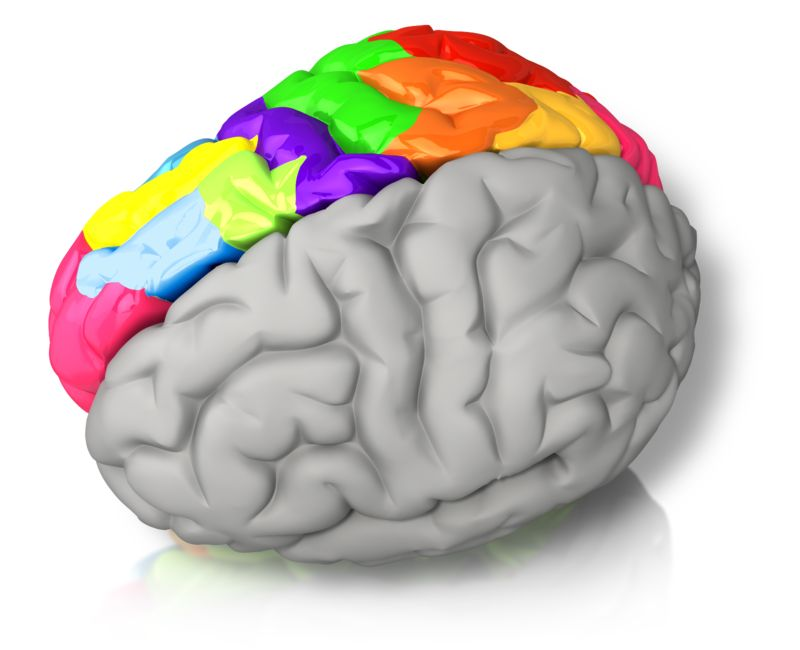 Clipart - Right Brained Color