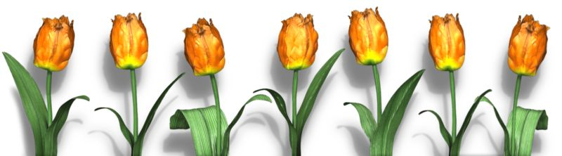 Clipart - Row Of Flowers