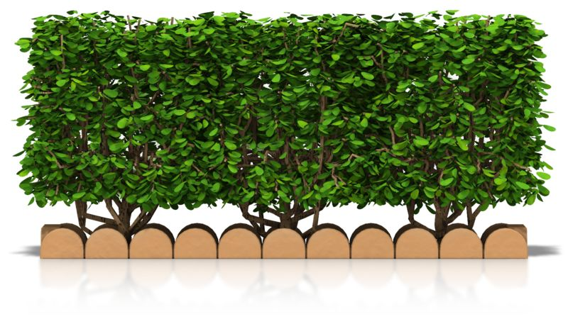 Clipart - Hedge Front View