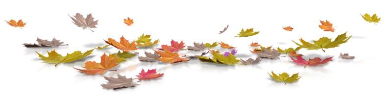 Clipart - Fallen Autumn Leaves