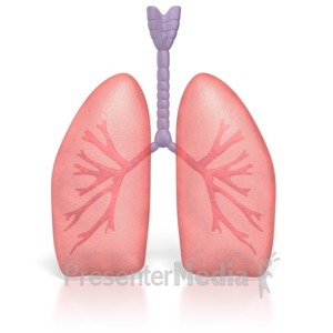 ID# 3791 - Human Lungs - Presentation Clipart