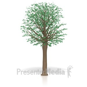 ID# 4083 - Mature Oak Tree  - Presentation Clipart