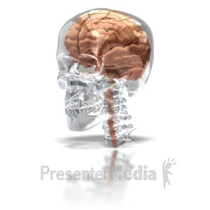 ID# 6581 - Brain in Glass Skull - Presentation Clipart