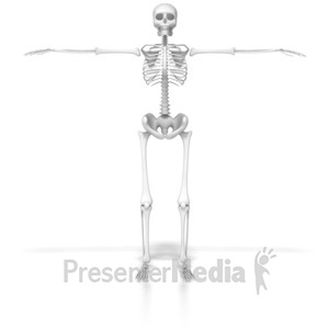 ID# 6588 - Skeleton In Default Pose - Presentation Clipart
