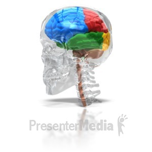 ID# 6671 - Glass Skull With Four Lobe Brain - Presentation Clipart