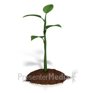 ID# 8829 - Small Plant Growth - Presentation Clipart