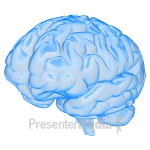 ID# 13816 - Brain Semi Transparent - Presentation Clipart