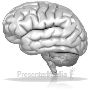 ID# 14165 - Black And White Brain - Presentation Clipart