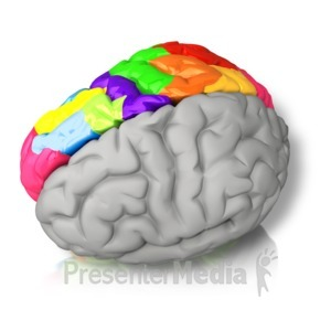 ID# 15068 - Right Brained Color - Presentation Clipart