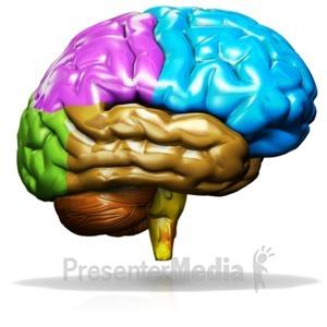Brain animated. Human rotating