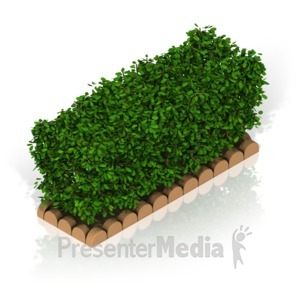 ID# 17373 - Hedge - Presentation Clipart